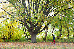©Licensed to London News Pictures 19/10/2020  <br /> Chelsfield, UK. A runner keeping fit. Bright autumnal weather today in Chelsfield, South East London. This week is expected to be a mild week with temperatures up to 18C. Photo credit:Grant Falvey/LNP