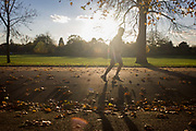 Sunlit jogger and autumn leaves in Dulwich Park, London borough of Southwark. Running across this autumnal scene, the man plods past with a setting mid-afternoon sun behind a maple, whose leaves lie on the ground waiting to be swept up by council park keepers. In the background are many other species of trees and shrubs. Dulwich Park is a 30.85-hectare park in the London Borough of Southwark, south London, England, opened in 1890 by Lord Rosebery, initially designed by Charles Barry (junior), later refined by Lt Col J. J. Sexby (who also designed Battersea, Ruskin and parts of Southwark Parks). In 2004–6, the park was restored to its original Victorian layout, following a grant from the Heritage Lottery Fund.