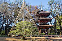 """The purpose of Yukitsuri or Yuki-tsuri is to protect trees from snow damage. In areas that get lots of heavy, wet snow, such structures are needed to support tree branches so they don't break when weighed down with snow.  During the winter months, many of these trees in Japanese gardens sprout strange conical structures that rise above the trees like a crown. They are called Yukitsuri or """"snow suspenders"""". The most common technique of preparing yuki-tsuri is by putting up bamboo poles near the trunk of the tree, then extending ropes from the top of the pole to be attached to the branches. The ropes prevent the branches from sagging  under the weight of the snow on top.  Occasionally the very top is adorned with a  decoration.  The construction of yuki-tsuri is usually done in December, and though it may look somewhat like a """"Christmas decoration"""" it has nothing to do with Christmas though the practice occurs in December."""