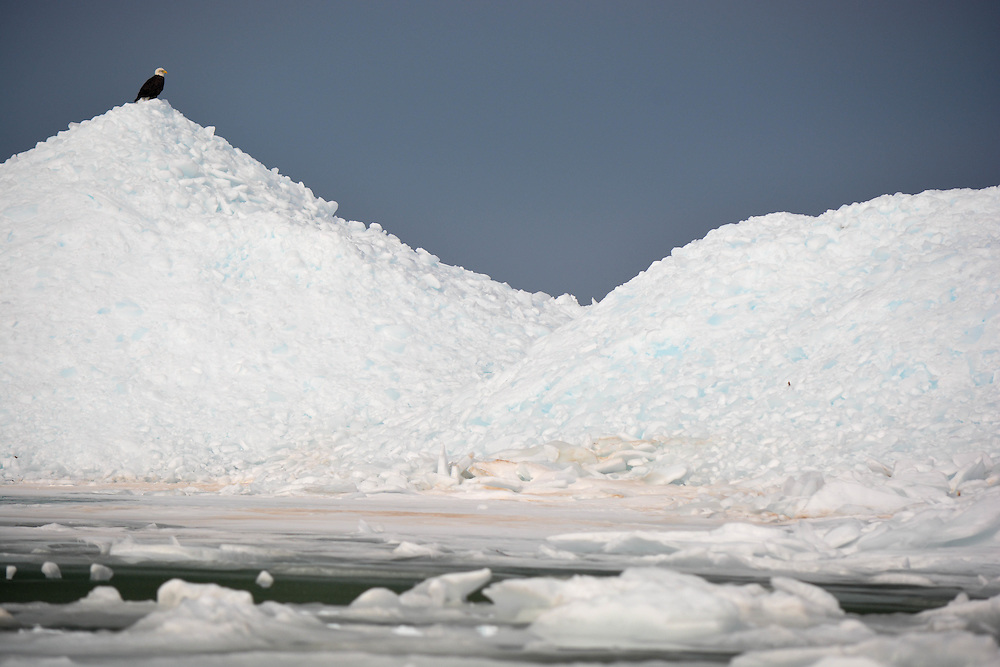 A Bald Eagle Perched High Atop A Mound Of Broken Ice Accumulating In The Straits Of Mackinac During The Spring Thaw