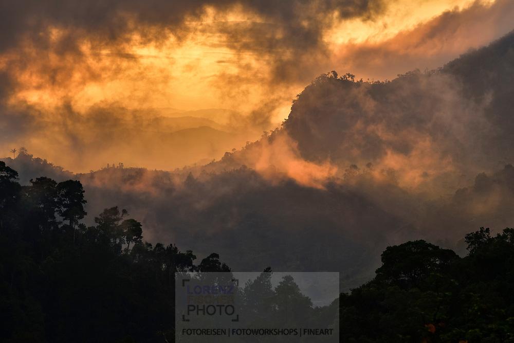 Morgendämmerung über dem Bergregenwald, Ranomafana, Madagaskar<br /> <br /> Dawn over the montane rain forest, Ranomafana, Madagascar