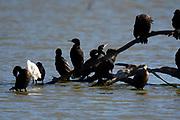 Birding photography from Texas Coastal Birding Trail