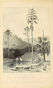Talipat Tree [Corypha umbraculifera, the talipot palm] From the book ' The Oriental annual, or, Scenes in India ' by the Rev. Hobart Caunter Published by Edward Bull, London 1834 engravings from drawings by William Daniell