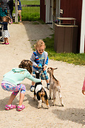 A boy feeds a goat kid at The Farm, Door County, Wisconsin, USA