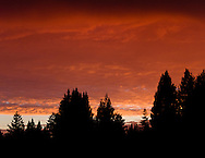 Orange clouds at sunset silhouetted by redwood trees, Santa Cruz, California