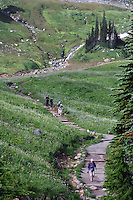 Hikers on the Golden Gate trail in Edith Creek Basin at Paradise Meadows, Mount Rainier National Park, WA USA