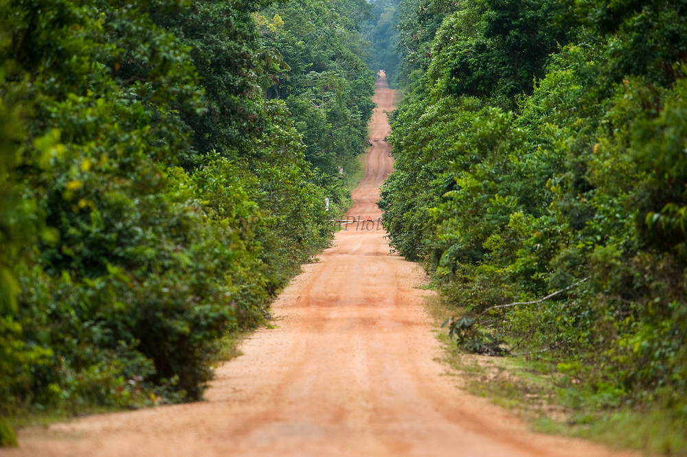 Iwokrama Road. Main access road between Georgetown and Lethem passing through the Iwokrama Forest.<br /> Iwokrama Forest Reserve<br /> GUYANA<br /> South America