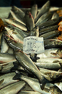 Fresh Sea Bass - Venice Italy