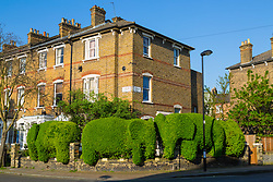 Topiary elephants form the hedge of a house on Romilly Road in Finsbury Park, London. London, April 20 2018.