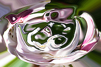 pink vortex, fluid shape with pink shades on blured background in green and white color.
