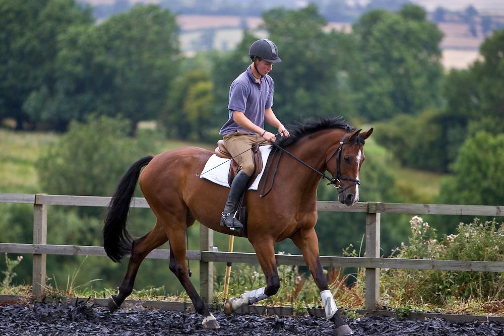 Young man schools a Dutch Warmblood horse, Oxfordshire, Great Britain