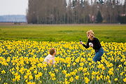 A woman poses for her friend in a field of daffodils in Skagit Valley, a fertile agricultural region in Washington known for its daffodil and tulip farms.
