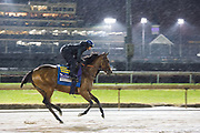 November 1-3, 2018: Breeders' Cup Horse Racing World Championships. Marley's Freedom