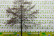 Bare winter tree with bare branches in front of construction sheeting themed with green leaves.