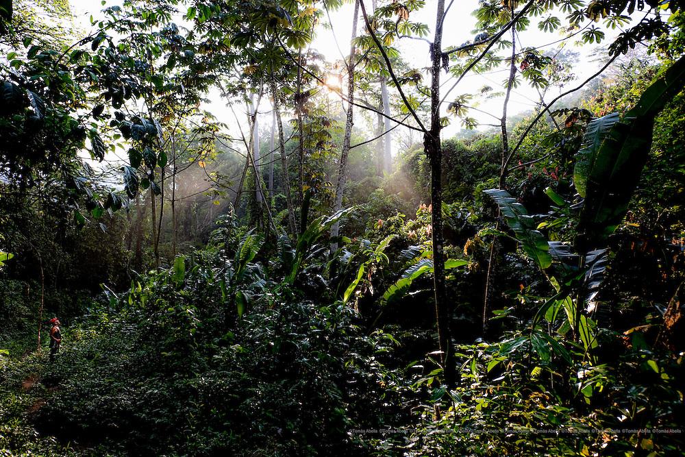 Saving Mexican criollo cocoa (Royal Cocoa of Soconusco).<br /> <br /> Tuzantán, Mexico. Path to the cocoa plantation in Sierra Madre de Chiapas.