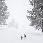 Winter life as a big winter storm sets in to Mammoth Lakes, California.