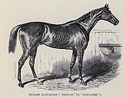 Bend Or (1877–1903) was a British Thoroughbred racehorse who won the 1880 Epsom Derby. His regular jockey Fred Archer, winner of thirteen consecutive British jockey titles, said Bend Or was probably the greatest horse he had ever ridden. Bend Or is the direct male-line ancestor of most modern thoroughbreds. From the book ' Royal Natural History ' Volume 2 Edited by Richard Lydekker, Published in London by Frederick Warne & Co in 1893-1894