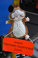 DURBAN - 25 February 2007 - Team Netherlands' mascot - a hamster - in the pits at the A1 Grand Prix in Durban, South Africa on Sunday. The hamster became the teams mascot in 2006 when Josh Verstappen won the inaugural Durban race after team members had to collect various car parts before the race to get it operational. <br /> <br /> Picture: Allied Picture Press/APP