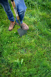 Checking soil profile by digging an inspection hole. Step 1 Remove turf