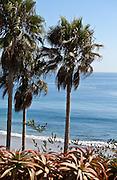 Palm Trees Along The Coast Of Orange County