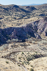 Long line of bison on move across rolling hills during bison roundup, Ladder Ranch, west of Truth or Consequences, New Mexico, USA.