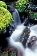 Image of a nature detail in the Columbia River Gorge, Oregon, Pacific Northwest by Randy Wells