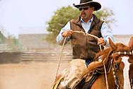 Will James Roundup, Ranch Rodeo, Working Ranch Horse, Hardin, Montana, Gene Kukowshi