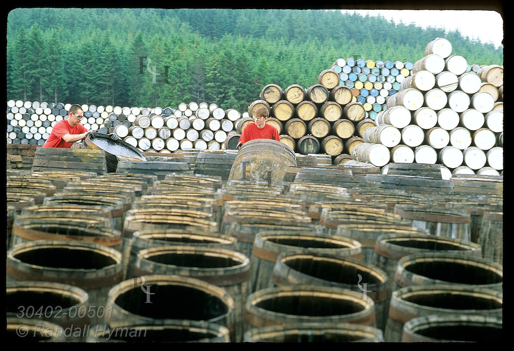 Coopers select used casks in yard @ Speyside Cooperage to repair for whisky industry;(v) Dufftown Scotland