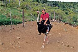 Tourist Riding Ostrich