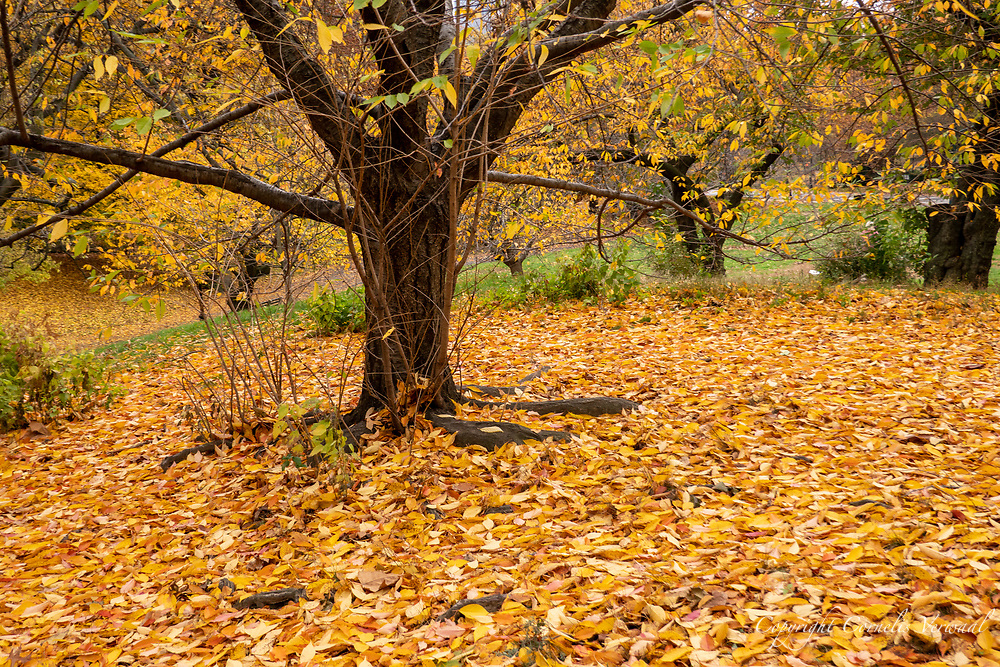 Autumn colors near the Sailboat Pond in Central Park