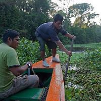 Wilder, a Yanayacu Indian guide pushes through tangled aquatic plants as he helps navigate a tourist boat up the Yanayacu River in Peru's Amazon Jungle.