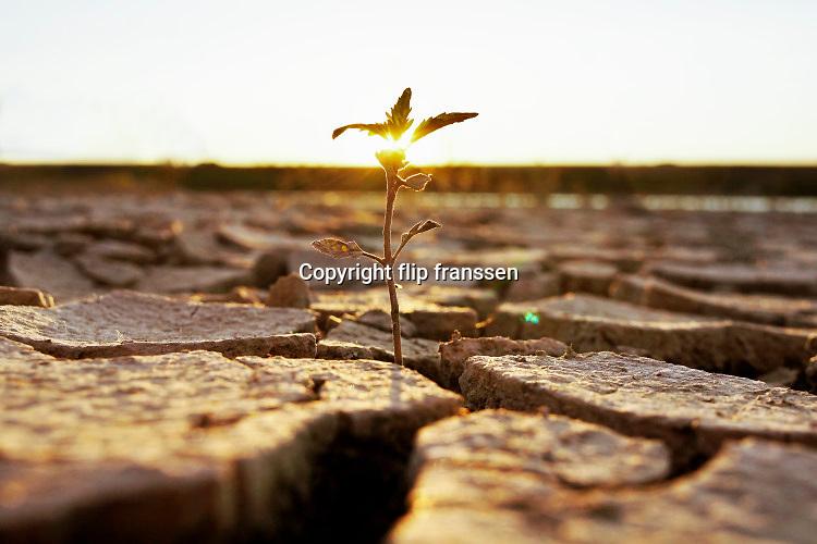 Nederland, Deest, 2-7-2019 Zonsondergang. Drooggevallen oever van een zijgeul, gegraven als waterberging ihkv ruimte voor de rivier, van de Waal . Door de lage waterstand is de klei opgedroogd en gebarsten.  Een zaadje in de bodem is ontkiemd en door een scheur bovende grond gekomen. Als het langer droog blijft zal de plant niet groot worden . Foto: Flip Franssen
