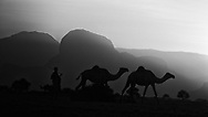 Northern Kenya. Africa. Camels and herders against sunset.