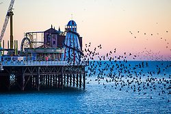 © Licensed to London News Pictures. 19/01/2017. Brighton, UK. Starlings murmuring at sunset over the Brighton Palace Pier. Photo credit: Hugo Michiels/LNP