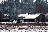 Podlasie, 30.11.2020. Pierwsze wieksze opady sniegu na Podlasiu tej zimy N/z wies Sokolda fot Michal Kosc / AGENCJA WSCHOD