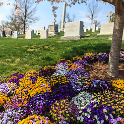 Washington, DC, USA - April 11, 2013: Spring flowers in bloom at the Arlington National Cemetery.