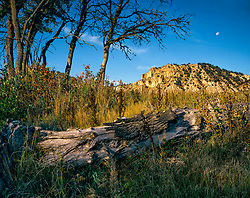 Horizontal image of early morning light illuminating old log in foreground in field of wild  grasses, with gaunt trees and canyon wall under deep blue sky with half moon rising above
