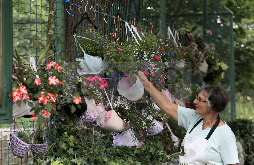 © Under licence to London News Pictures. 21/08/2016. Bras turned into hanging baskets by the ladies of Shotley WI, on display at Shotley Church Hall at Snods Edge in Northumberland, UK. Members of Shotley Womens Institute have re-cycled bras to make hanging baskets for the national WI hanging basket competition, which will be judged this coming bank holiday weekend. The bras are made up of some of their own and some donated by local women. Pictured is WI member Cathy Railton topping them up with water. Photo Credit: Stuart Boulton/LNP