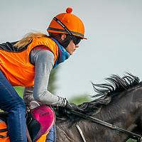 Emma on warren hill gallops newmarket