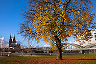 chestnut tree at the banks of the river Rhine in the district Deutz, view to the cathedral and the Hohenzollern bridge, Cologne, Germany.<br /> <br /> Kastanie am Rheinufer in Deutz, Blick zum Dom und zur Hohenzollernbruecke, Koeln, Deutschland.