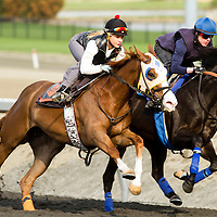 Thoroughbred Racing 2014 - Gallery 03