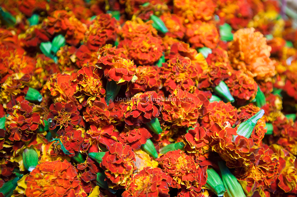 Orange flowers for sale in the Dadar flower market, Mumbai, India.