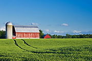 wheat field and red barn<br />Carleton Place<br />Ontario<br />Canada