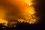 PINE FOREST WILDFIRE