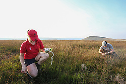 © Licensed to London News Pictures. 06/09/2021. Marsden, UK. National Trust worker Victoria Holland and volunteer Claire Goddard plant Sphagnum Moss on the Marsden Moor Estate in the South Pennines. Sphagnum Moss, a peat forming plant which helps to reduce flooding and reduce fire risk by acting as a sponge, is being planted to help restore large area of moorland which were devastated by fires in April 2021. Photo credit: Adam Vaughan/LNP