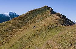 THEMENBILD - ein kleine Schafherde unterhalb eines Bergkammes. Wanderung auf das Imbachhorn in den Hohen Tauern, das zwischen dem Fuscher Tal und dem Kapruner Tal liegt, aufgenommen am 09. September 2020 in Kaprun, Oesterreich // a small flock of sheep below a mountain ridge. Hike to the Imbachhorn in the Hohe Tauern, which lies between the Fuscher Valley and the Kaprun Valley, in Kaprun, Austria on 2020/09/09. EXPA Pictures © 2020, PhotoCredit: EXPA/Stefanie Oberhauser