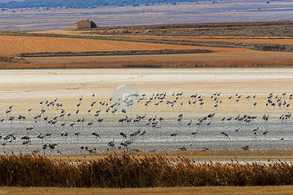 Grupo de grullas volando. Gallocanta. Zaragoza. Aragon. España. Europa ©Javier Abad Country Sessions / PILAR REVILLA