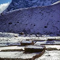 Stone walls surround potato fields in Macchermo, a herders village in the Gokyo Valley, Khumbu Region, Nepal.