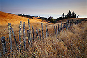 Summer evening along a Northern California country road in Sonoma County.