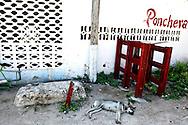 Ponchera dog in Gibara, Holguin, Cuba.